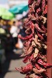 Pimientas frías rojas Fotografía de archivo libre de regalías