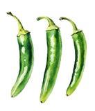 Pimientas frías verdes Imagen de archivo libre de regalías