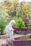 Pimientas hermosas de la cosecha del pequeño niño en huerto foto de archivo libre de regalías