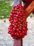 Pimientas rojas Imagen de archivo
