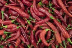 Pimientas rojas Foto de archivo libre de regalías