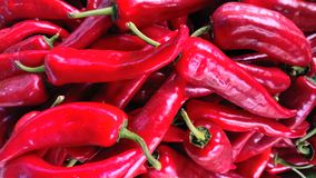 Pimientas rojas Imagenes de archivo