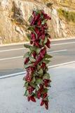 Pimientas rojas colgantes Foto de archivo libre de regalías