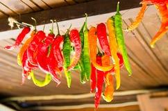 Pimientas rojas verdes en la cuerda para secarse Imagenes de archivo