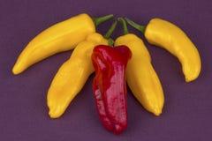Pimientas rojas y amarillas imagenes de archivo