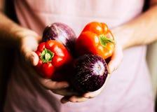 Pimientas rojas y berenjenas orgánicas frescas en manos del ` s del hombre Fotografía de archivo libre de regalías