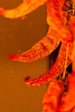 Pimientas secadas otoño Fotografía de archivo libre de regalías