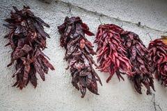 Pimientas secadas que cuelgan en la pared Fotografía de archivo libre de regalías