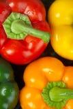 Pimientas, verde amarillo rojo y naranja Foto de archivo libre de regalías