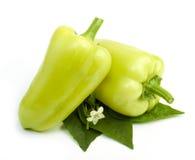 Pimientas verdes dulces Fotos de archivo