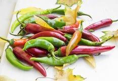 Pimientas y Autumn Leaves de chiles calientes Imagen de archivo libre de regalías