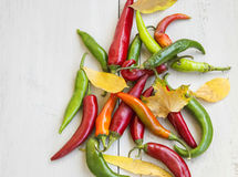 Pimientas y Autumn Leaves de chiles calientes Foto de archivo