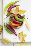 Pimientas y Autumn Leaves de chiles calientes Fotografía de archivo libre de regalías