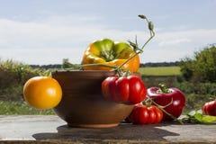 Pimientas y tomates Foto de archivo libre de regalías