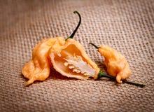 Pimiento picante estupendo del fantasma del melocotón del ` s de Jay Imagenes de archivo