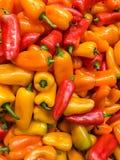 Pimiento rojo y anaranjado en el mercado vegetal Fotografía de archivo