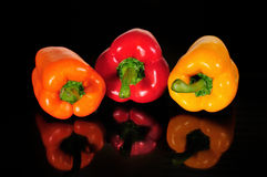 Pimiento for vegetarian. Pimientos,orange,red and yellow with black background and reflected Royalty Free Stock Image