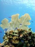 Pináculo coralino Fotos de archivo libres de regalías