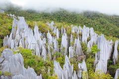 Pináculos da pedra calcária no parque nacional do mulu do gunung Imagens de Stock
