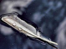 Pin羽毛在水中 库存照片