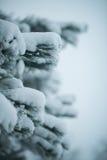 Pin à feuilles persistantes de Noël couvert de neige fraîche Photos libres de droits