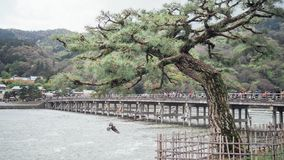 Pin à la rive et au vol de colombe Image libre de droits