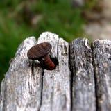 Pin в древесине Стоковая Фотография RF