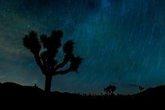 Pin следа звезды дерева Иешуа Стоковые Изображения