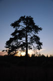 Pin-arbre Photo stock