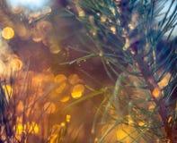 Pin au coucher du soleil photo libre de droits