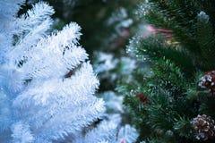 Pin blanc et vert de Noël au foyer mou de nuit Photo stock