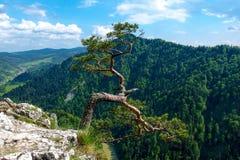Pin célèbre sur la crête de Sokolica et rivière de Dunajec en Pologne du sud image libre de droits