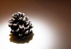 Pin-cône sur la table photographie stock