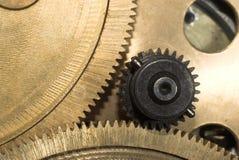 Piñón close-up#3 Fotografía de archivo libre de regalías