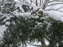 Pin couvert dans la neige photos libres de droits