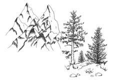 Pin d'arbre conifére au fin fond images libres de droits