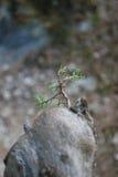 pin d'isolement par cône proche de fond vers le haut de blanc Photographie stock