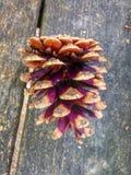 pin d'isolement par cône proche de fond vers le haut de blanc Image libre de droits