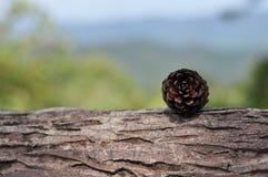 pin d'isolement par cône proche de fond vers le haut de blanc Photo stock
