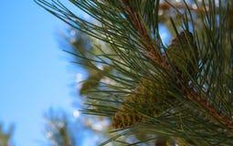 pin d'isolement par cône proche de fond vers le haut de blanc Image stock