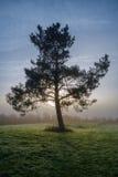 Pin dans le brouillard Image libre de droits