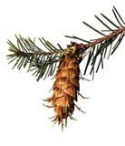 pin de cône Image stock