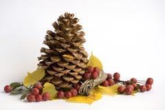 pin de cône de baies Image libre de droits