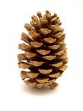 pin de cônes Photo libre de droits