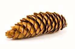 pin de cône Images stock