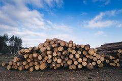Pin en bois avec le ciel bleu sur le fond Photo stock