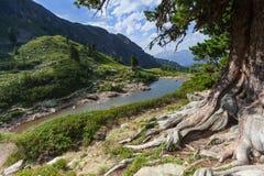 Pin en pierre dans les montagnes Photo stock