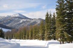 Pin et montagne de neige Images libres de droits