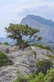 Pin haut sur une montagne Images libres de droits
