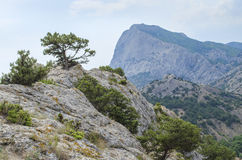 Pin haut sur une montagne Photos stock